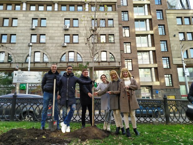 В Киеве посадили тополя, фото: Киевзеленстрой