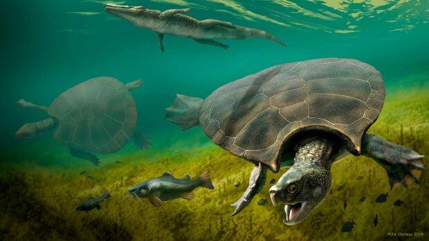 Ученые нашли рогатую черепаху размером с вашу машину, это нужно увидеть