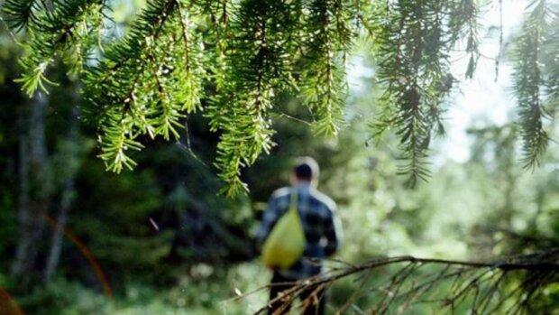 Дивна істота стежила за туристами у лісі: з кожним нашим кроком навколо ставало все тихіше й тихіше