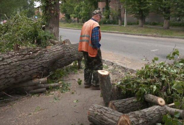 Штормовий вітер влаштував деревопад у Харкові - звалилося на перехожих