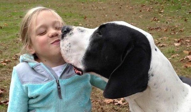 Користувачів підкорив пес з величезним серцем (відео)