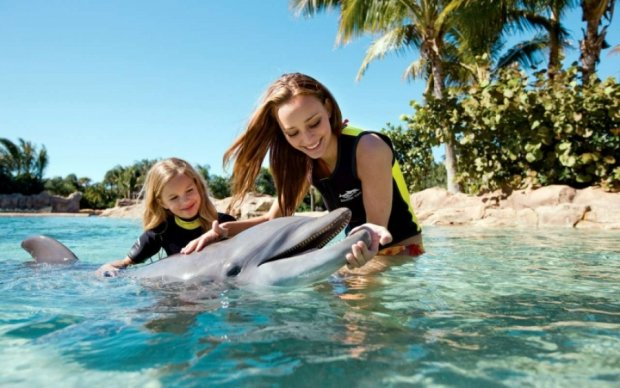 """Зоологи готовятся """"поговорить"""" с дельфинами"""