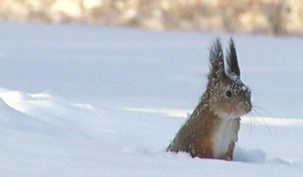 Как эстонская белка ныряет в снег (видео)