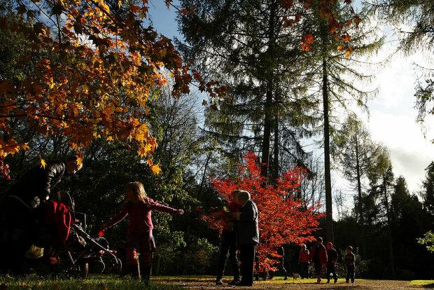 Осінь, фото: gettyimages