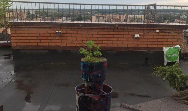 """По-королівському: копи спіймали чоловіка, який перетворив дев'ятиповерхівку на город з """"диво-рослинами"""""""