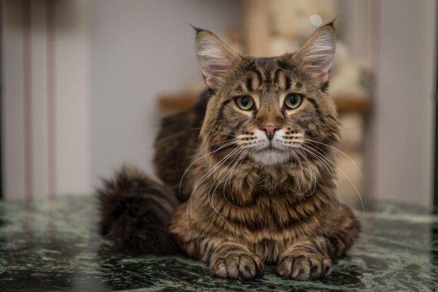 Кот, фото из свободных источников