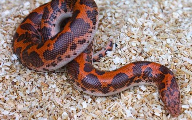 Ваша жизнь никогда не будет прежней: видео о змеях порвало шаблоны