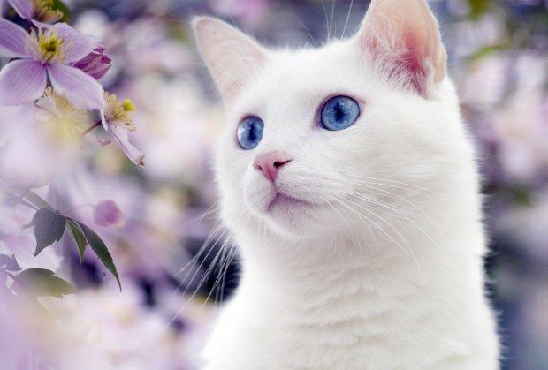 Найкращі меми 27 червня: кіт-ласун і найкращі фрази, які розкриваються не відразу