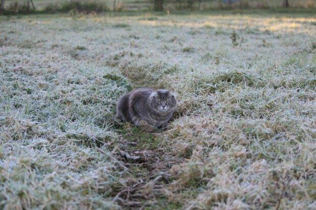 """Погода на завтра: осенние морозы превратят украинцев в белых ходоков, кому """"повезет"""" столкнуться с гололедом и осадками"""