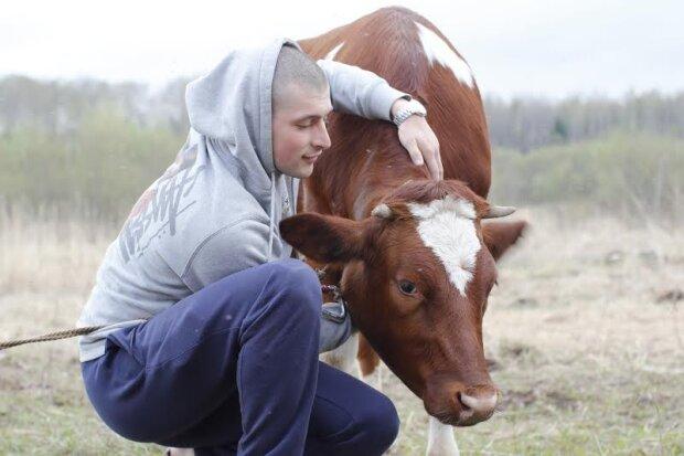 Спасали всем селом: на Ивано-Франковщине из канализации достали корову
