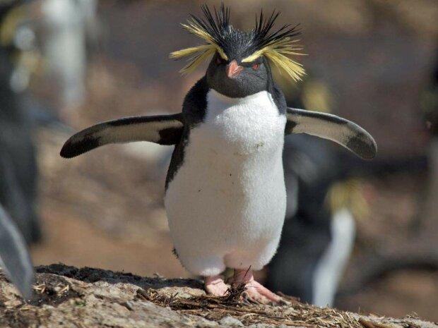 Вчених до чортиків налякав пінгвін-монстр з людськими рисами: тільки подивіться на цього красеня