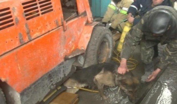 Харьковские пожарные достали из-под погрузчика собаку (видео)