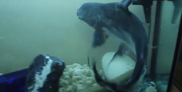 Прикарпатець завів вдома хижаків Амазонки, кадр з репортажу ТРК РАІ: YouTube