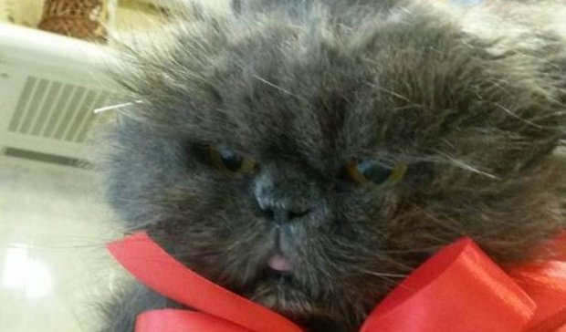 Український кіт-довгожитель помер в Одесі