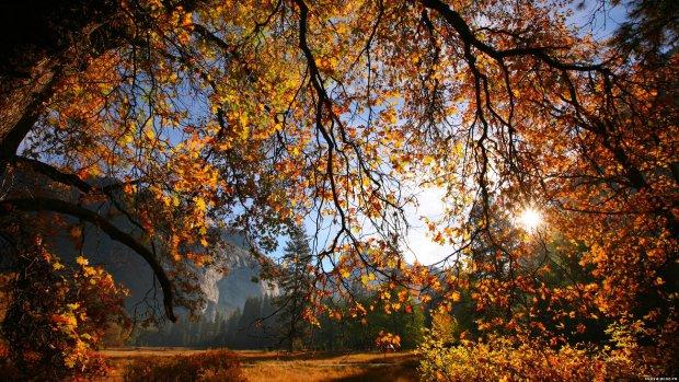 Погода на 10 октября: продолжится ли идеальная осень