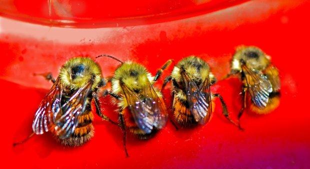 Дівчина ледь не осліпла після походу на цвинтар: в її очах знайшли живих бджіл