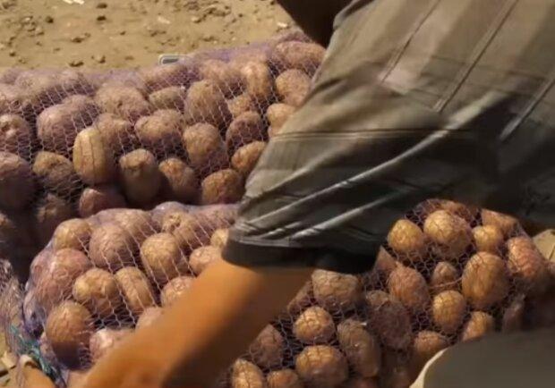 """В Україні рекордно зріс імпорт картоплі: лишимося без """"другого хлібу"""""""