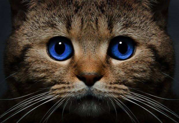 Зір кішки: медики представили унікальні краплі для очей