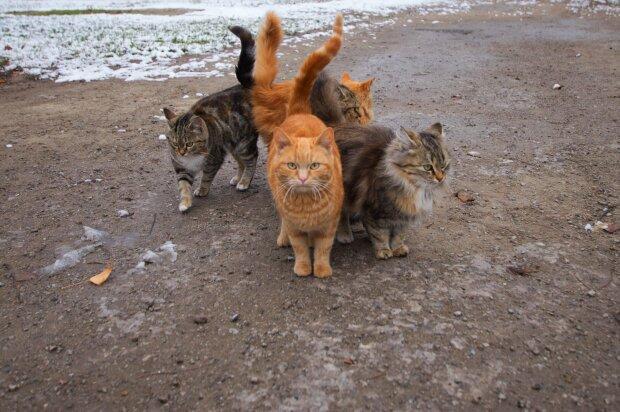 Коты, фото: Евгений Вик