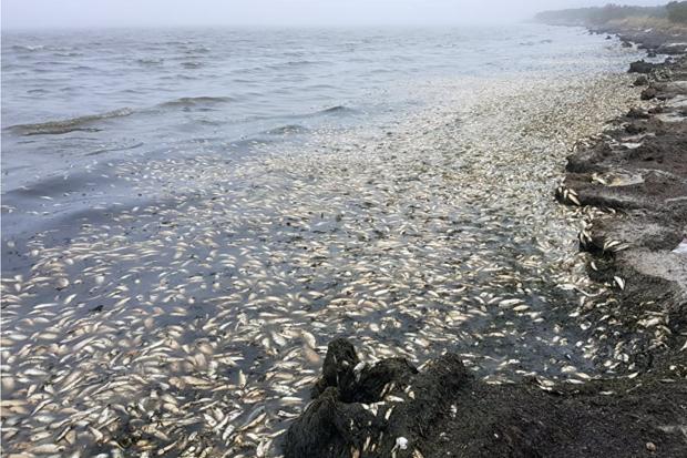 """Тонни мертвечини усіяли Курильські острови: """"російському миру"""" загрожує екологічна катастрофа"""