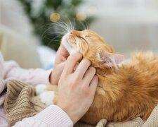 кошка, фото: royalcanin.com