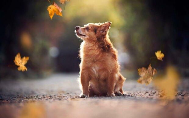 Собака, Apkpure