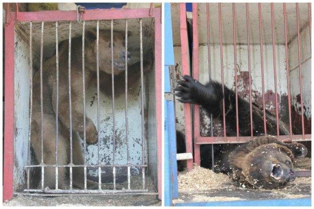 """Зоозащитники напомнили украинцам о судьбе животных в клетках: """"Устали от карантина? Держитесь"""""""