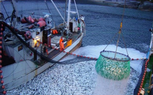 Рыбный дождь: месть беспощадных сардин сняли на видео