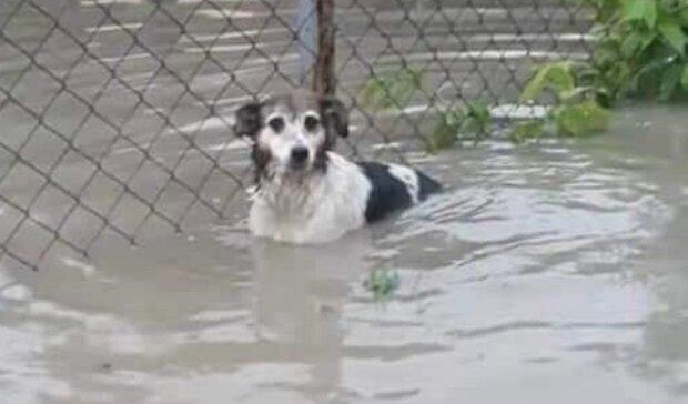 Українець пожертвував пів квартири затопленим собакам Прикарпаття - красень із золотим серцем