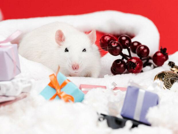 Парфуми, келихи та дрібнички: які новорічні подарунки розгнівають примхливого Білого Щура