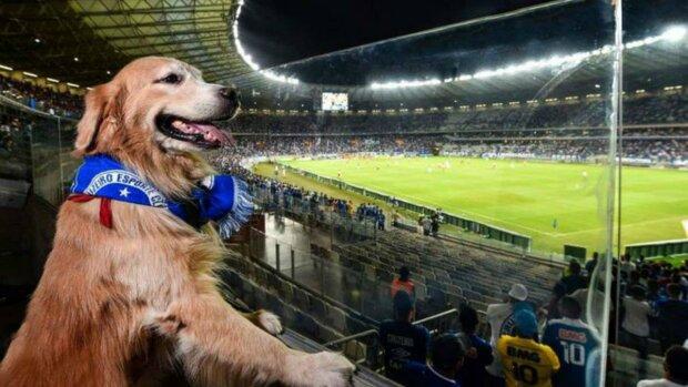 Веселый пес чуть не сорвал чемпионат Бразилии: позор стюарда попала на видео