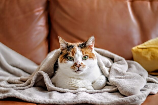 кішка, monno