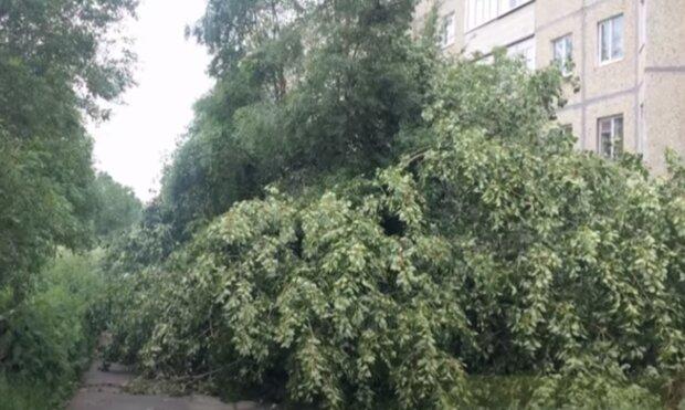 Буря поставила Харківщину з ніг на голову - зламані дерева по всій дорозі, комунальники заметушилися