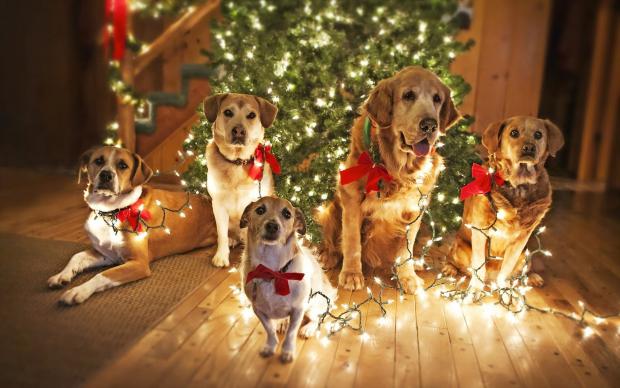 Новогодние приметы 31-го декабря