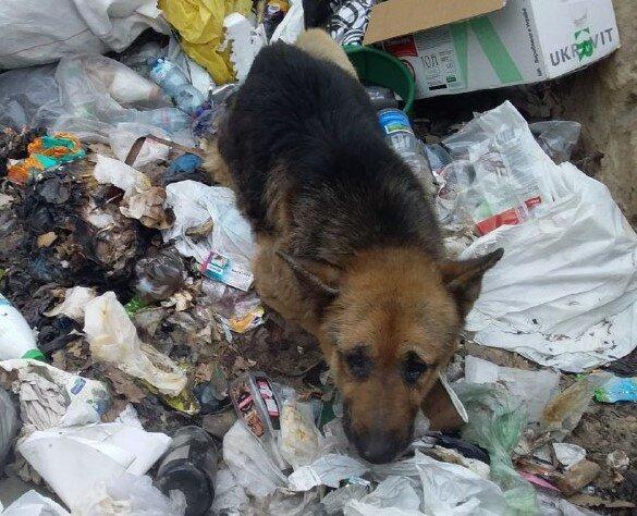 врятований пес, фото:Служба порятунку тварин