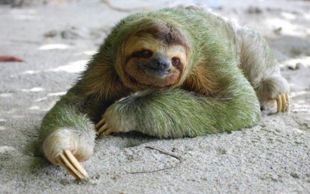 """Коли нікуди не поспішаєш: """"лінивці"""" отримали власне свято"""