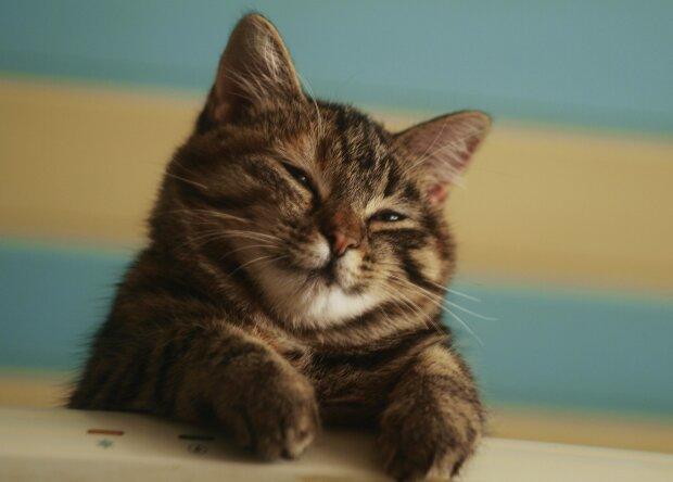 котенок, pinterest