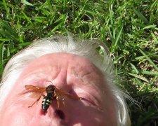 Дніпрян атакують величезні комахи-монстри