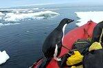 Пінгвін, скріншот: YouTube