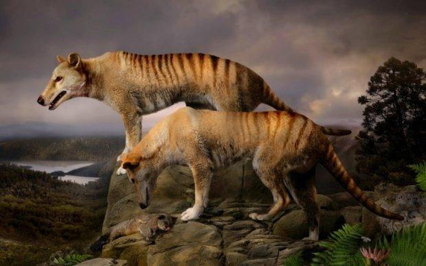 В Австралии заметили давно вымершее животное