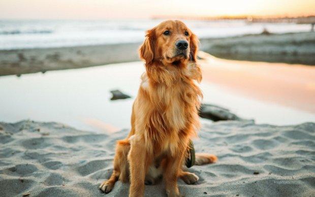 Пес врятував життя недолугому господареві. Він став справжньою знаменитістю в мережі