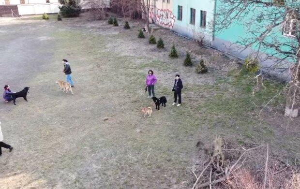 Киевских собачников осчастливили на Подоле: целый парк для прогулок