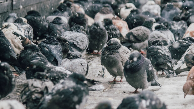 Не забудьте парасольку: стихія готує мокрий сюрприз Запоріжжю 15 грудня