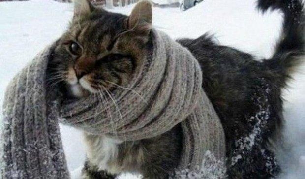 На Украину надвигаются сильные морозы