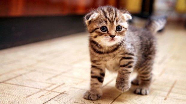 Він так цього не залишить: у мережі показали наймстивішого кота у світі, відео