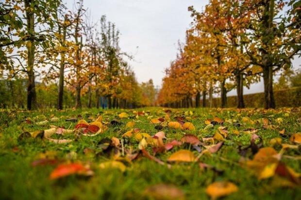 Выходной начнется с сюрпризов: синоптики удивили харьковчан прогнозом на 27 октября
