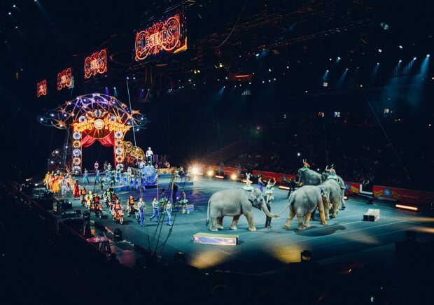 Цирк с животными, фото: life.bodo.ua