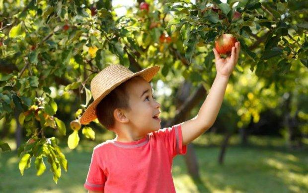 Найдена настоящая прародина яблок