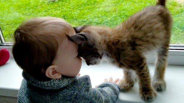 Кошка заменила малышу мать, фото Getty Images