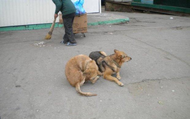 Российские депутаты нашли применение бродячим псам